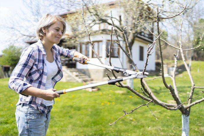 Jak i kiedy należy przycinać drzewka owocowe?