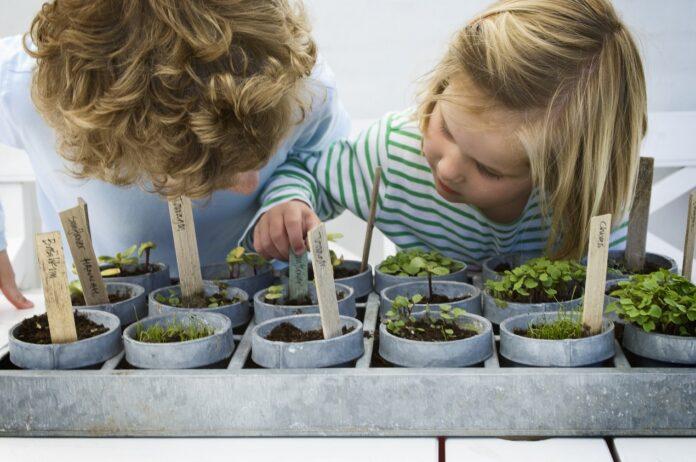 Wybieramy doniczki na zioła. Co brać pod uwagę?
